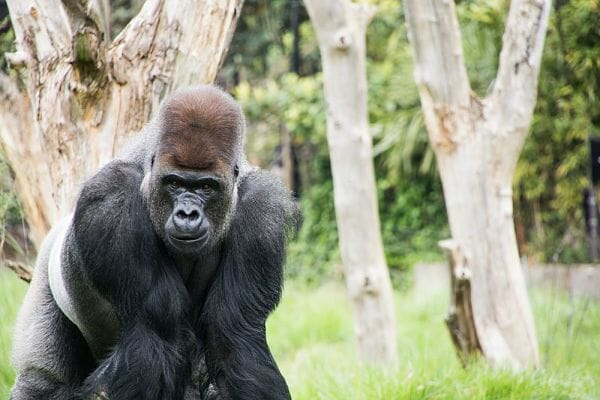 <h3>London Zoo</h3>